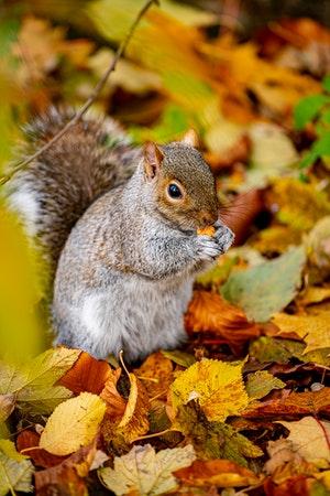 L'écureuil, symbole de l'épargne